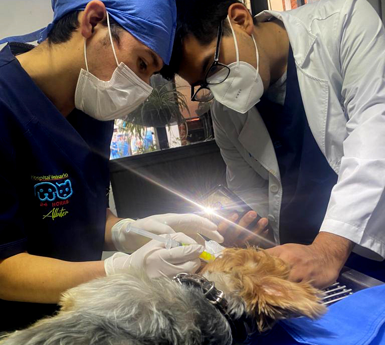Urgencias Hospitalarias mascotas