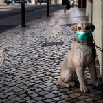 Coronavirus Felino y Canino