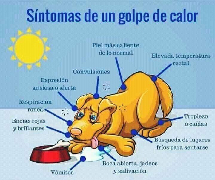 Sintomas de un golpe de calor