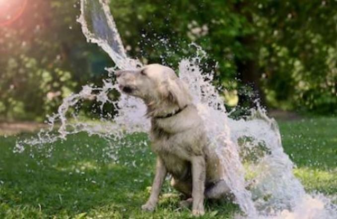 Bañar a tu perro