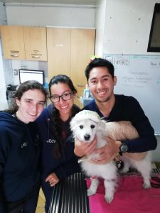 Hospital veterinario Albiter (11)