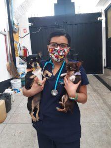 Hospital veterinario Albiter (6)
