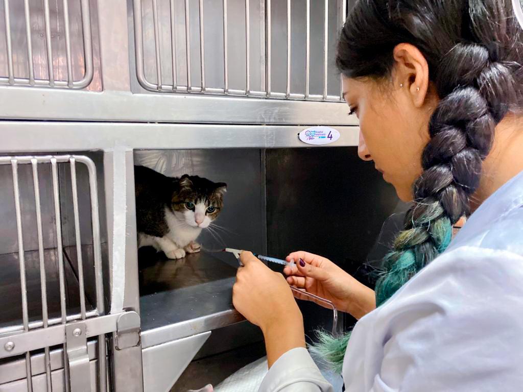 Hospitalizacion-felinos