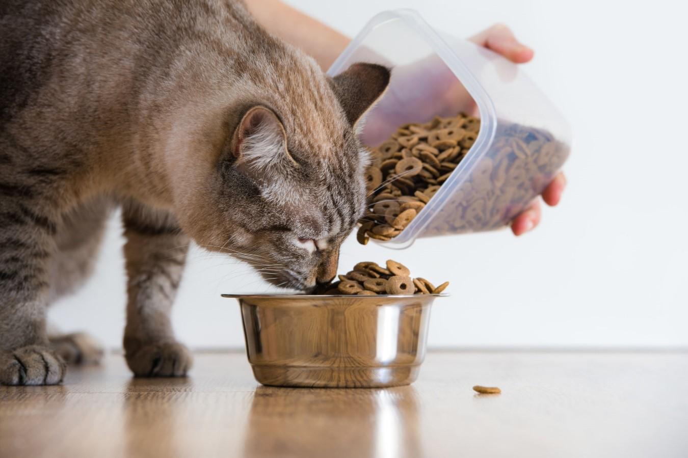 Alimentación en Gatos