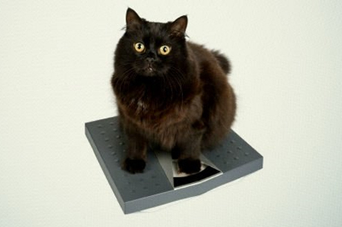 ¿Cuánto debe pesar mi gato?