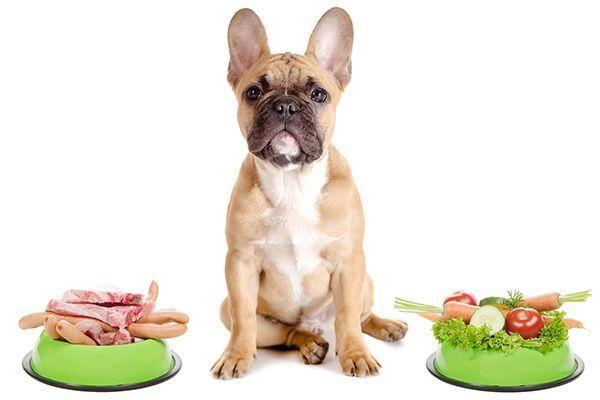 Comida casera para mascotas