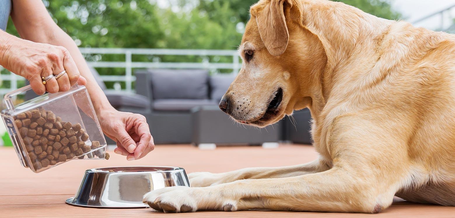 Alimentación en mascotas