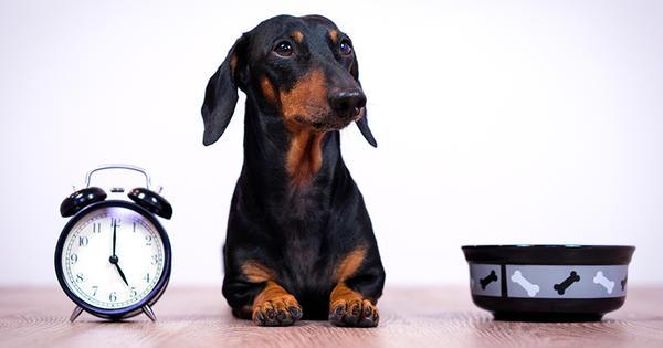 ¿Cómo y cuándo alimentar a tu mascota?